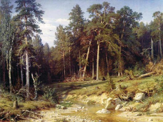 Шишкин, картина 'Сосновыймбор в Вятской губернии' фото
